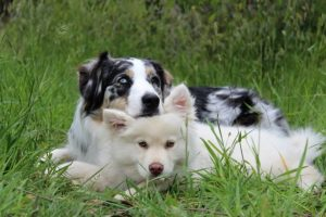 two dogs laying on each other in a field of grass.
